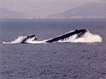 U-209 class submarine